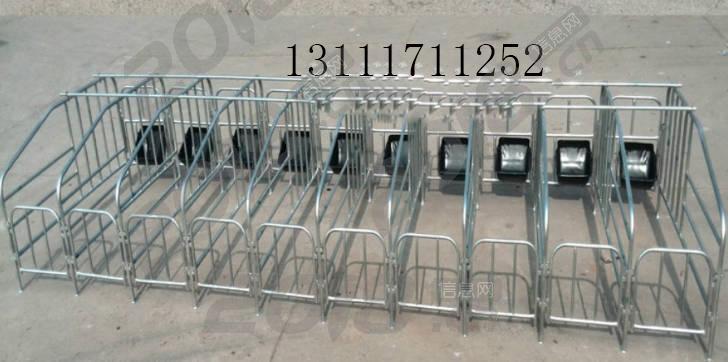 猪哈哈母猪定位栏使用优势定位栏图片