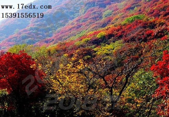 武汉周边两日游去薄刀锋景区赏红叶口碑评价怎么样