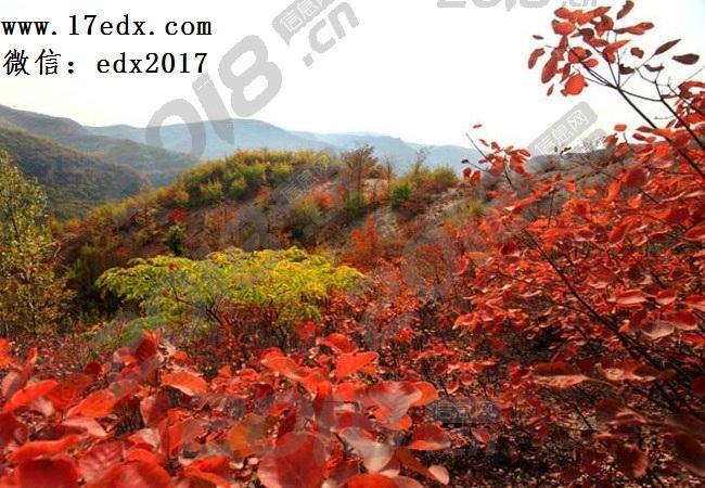 武汉周边秋游去英山大别山南武当旅游景区赏红叶怎么样