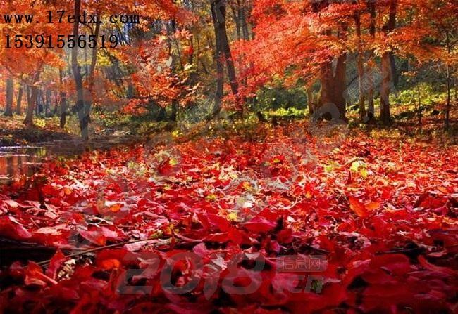秋天武汉周边赏红叶去哪里比较好哪里值得去?