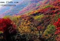 武汉周边游去英山毕昇故里赏红叶的口碑怎么样