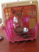 青岛威海到韩国空运宠物 宠物随机 宠物托运