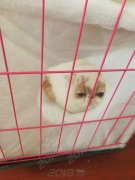 宠乐游 专业宠物托运 天冷宠物保暖措施齐全